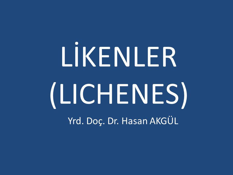 Liken nedir .Likenler ya da Lichenes; başlı başına birer organizma değildirler.