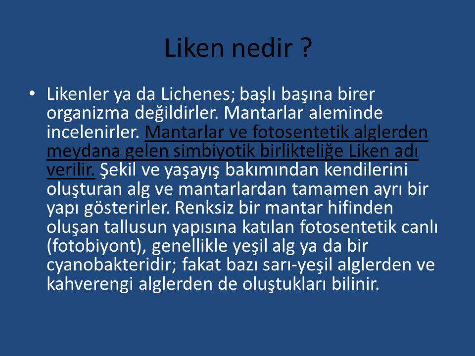 Liken nedir ? Likenler ya da Lichenes; başlı başına birer organizma değildirler. Mantarlar aleminde incelenirler. Mantarlar ve fotosentetik alglerden
