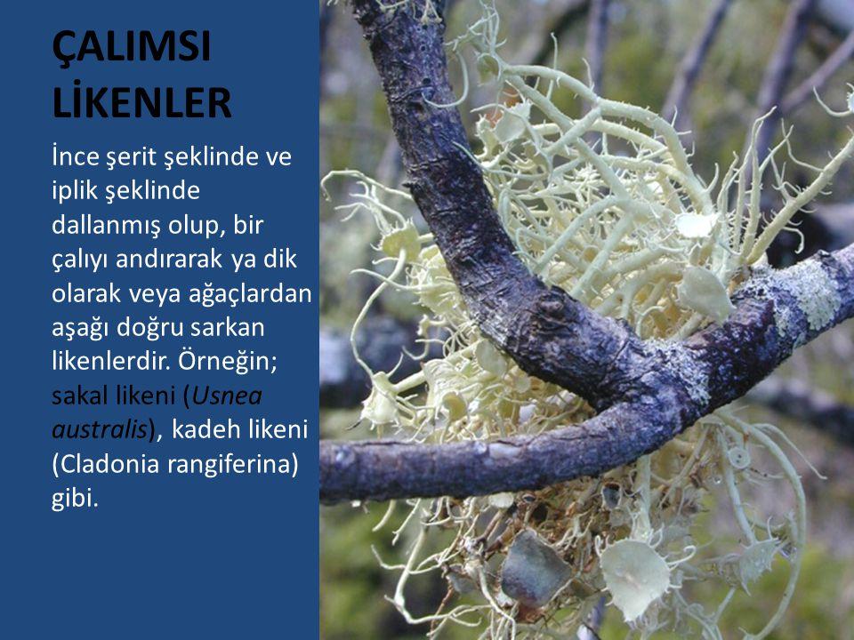 KAYNAKLAR Mader, E.Genel Biyoloji (Concepts of Biology) Yıldız, Atilla (1998).