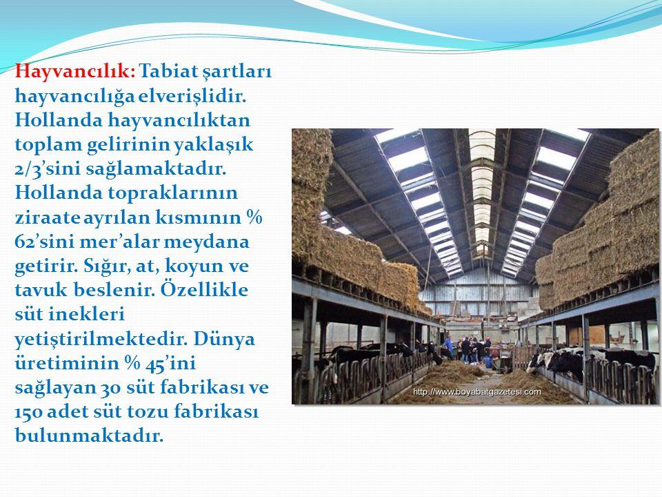 Hayvancılık: Tabiat şartları hayvancılığa elverişlidir. Hollanda hayvancılıktan toplam gelirinin yaklaşık 2/3'sini sağlamaktadır. Hollanda toprakların