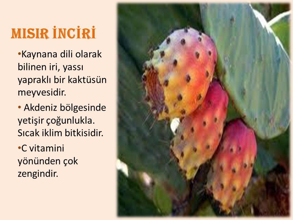 MISIR İ NC İ R İ Kaynana dili olarak bilinen iri, yassı yapraklı bir kaktüsün meyvesidir. Akdeniz bölgesinde yetişir çoğunlukla. Sıcak iklim bitkisidi