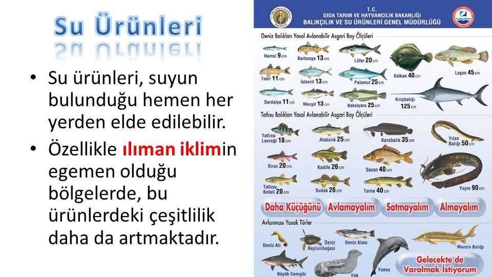Su Ürünleri Halk arasında, omega 3 kaynağı olarak bilinirler. 13