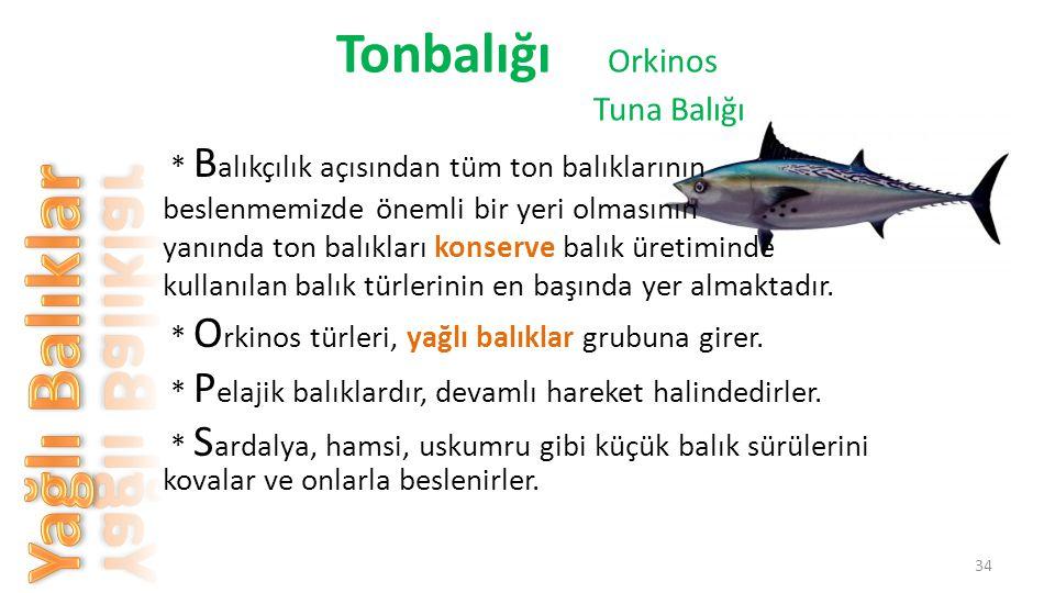 * Çok hızlı yüzerler, boyları yaklaşık 5 - 6 metreye kadar uzar ve etleri lezzetlidir.