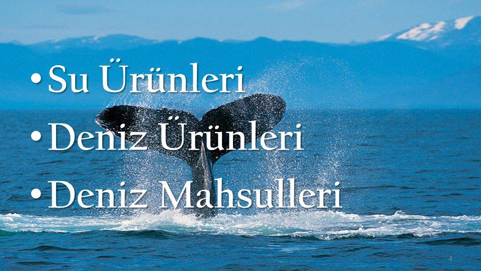 Bu Sunumda… 1.Su Ürünlerine Genel Bakış 2.Balıklar 3.Kabuklu Su Ürünleri 4.Yenilebilen Yumuşakçalar 5.Deniz Bitkileri 6.Osmanlı Deniz Mutfağımız 7.Su Ürünleri Tüketimi & Öneriler 5