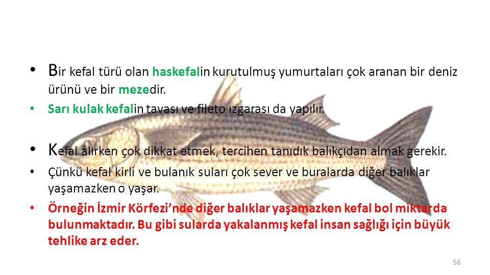 Levrek Vücudu iri ve kalın pullarla kaplı bu gösterişli balığın sırtı koyu kurşuni renktedir.