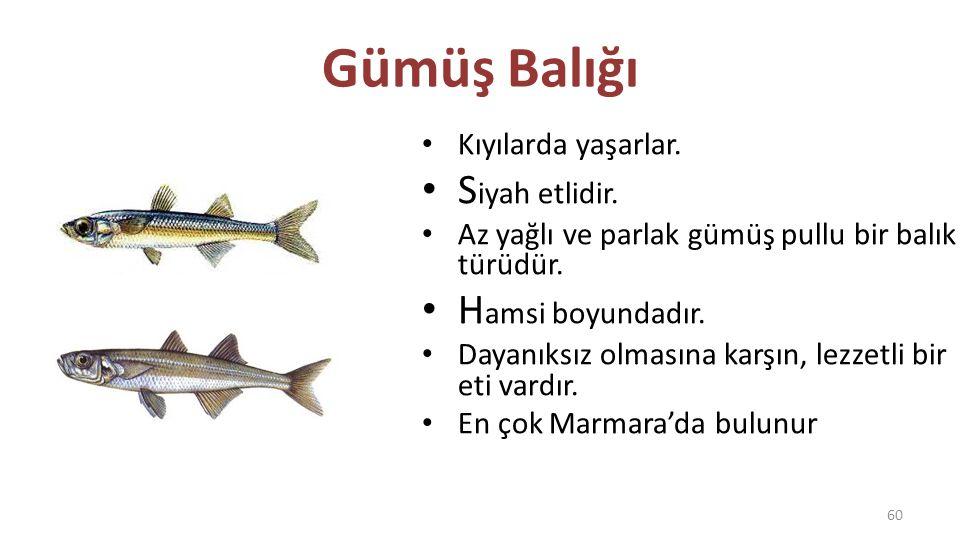 Gümüş Balığı T aze yenmesi ve hemen tüketilmesi gereken bir balık türüdür.