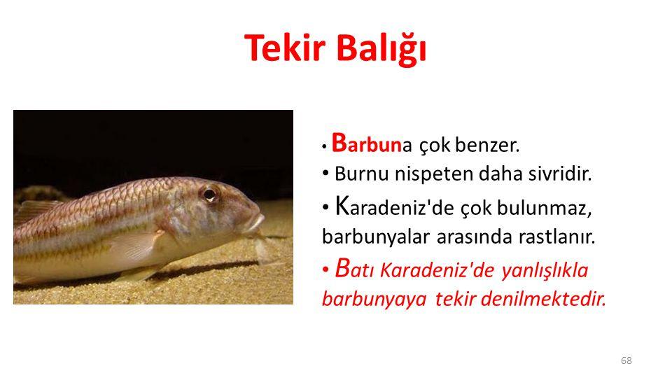 Camgöz Köpekbalığı S ürü halindeki küçük balıkları ve ahtapot yiyerek beslenir.