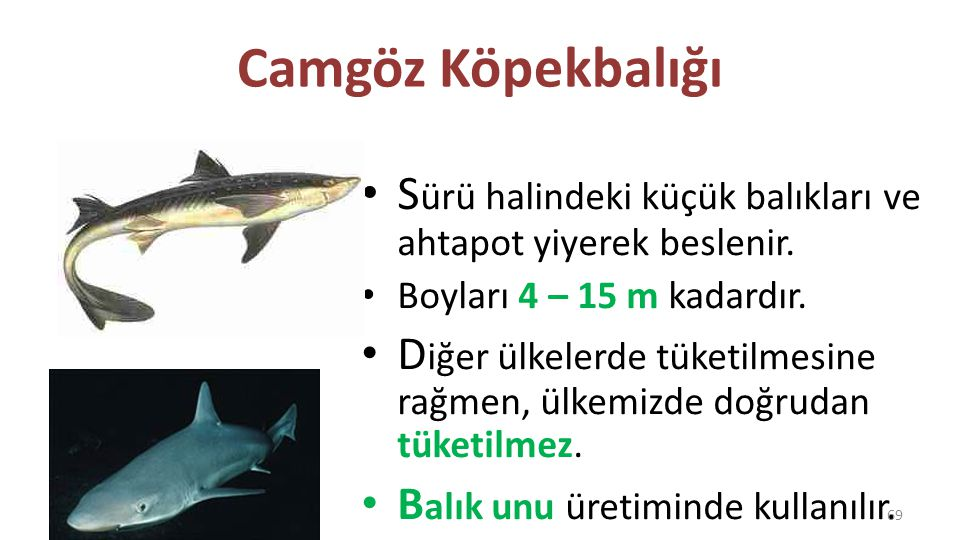 Dülger D iğer isimleri: – Peygamber balığı – Dikenli peygamber G ezgin bir balıktır, aylara göre değişik kıyılara geçer.
