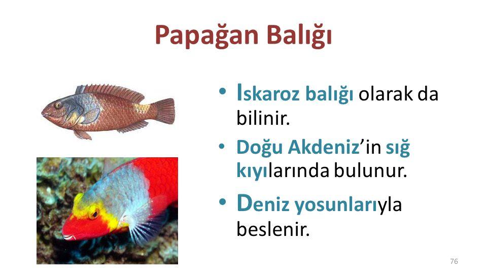 Akya D iğer İsimleri: – Leka – Kuzu Balığı – Çıplak Balık – İskender Balığı D iğer deniz canlılarını canavar gibi yer.