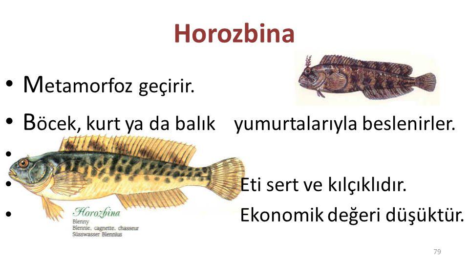 Kırlangıç Balığı Ege ve Akdeniz'de yaşayan, renkli balıklardır.