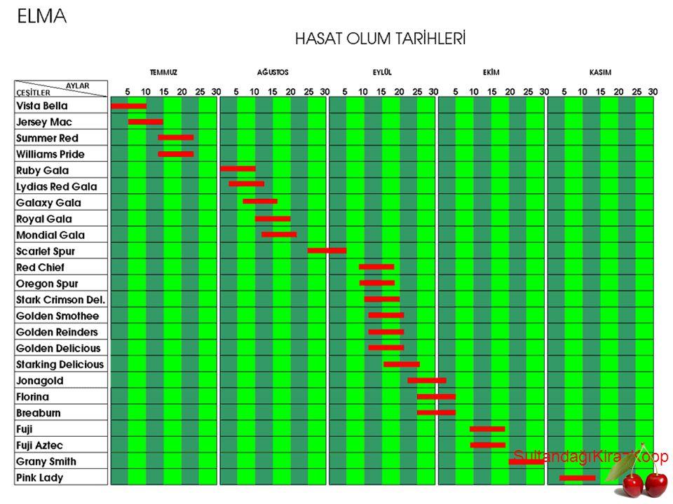 ELMA ANAÇ GEL İŞİ M TABLOSU SultandağıKirazKoop