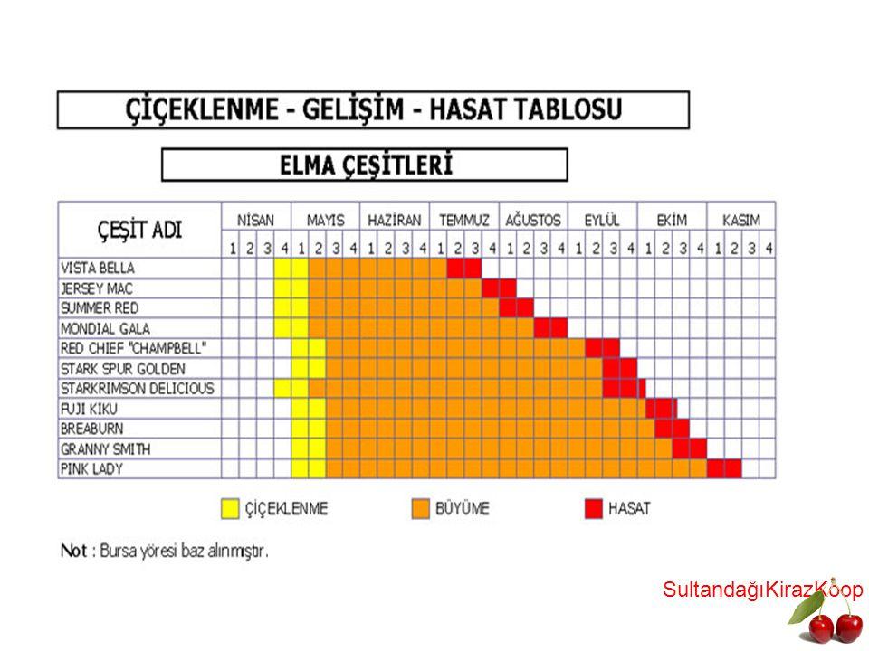 KİRAZ BODUR-YARIBODUR ANAÇLARI GİSEL A ANAÇLARI; Almanya menşelidir.Gisel A3-A5-A6-A7-A12 çeşitleri vardır.Derin,pH sı 8 in altında, Aktif kireci %10 dan düşük, sulama imkanı olan topraklarda kullanılmalıdır.