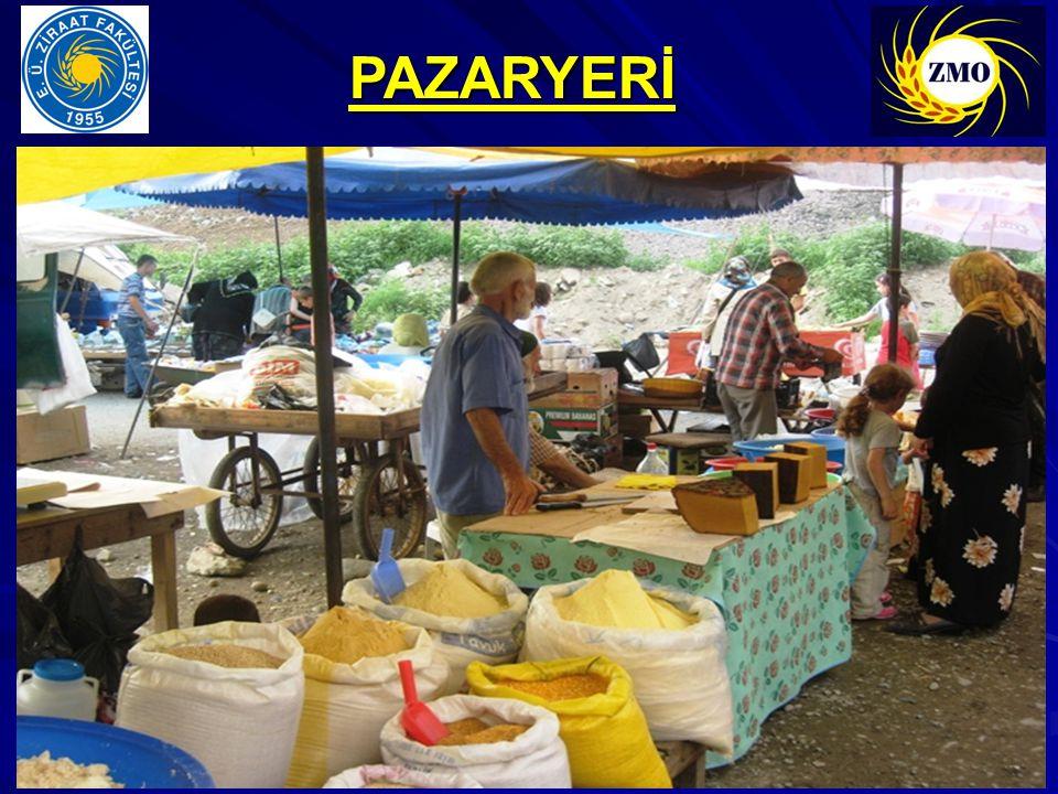 PAZARYERİ