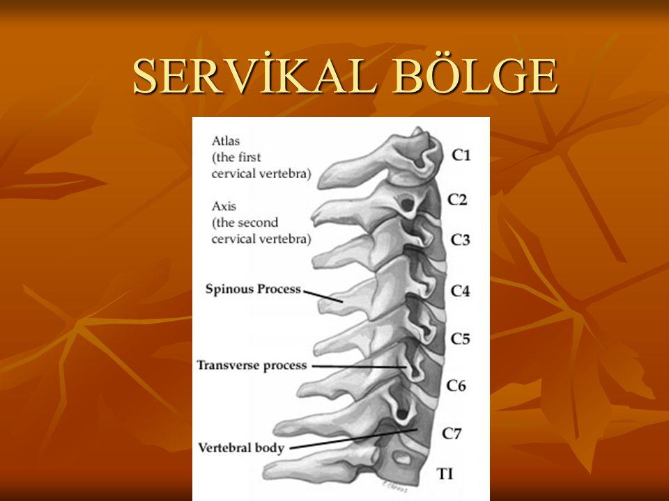 ÖZEL TESTLER - 3 Birinci torakal sinir germe testi: Hasta kolunu abdüksiyon, dirseğini fleksiyona getirerek elini başının arkasına koyar.