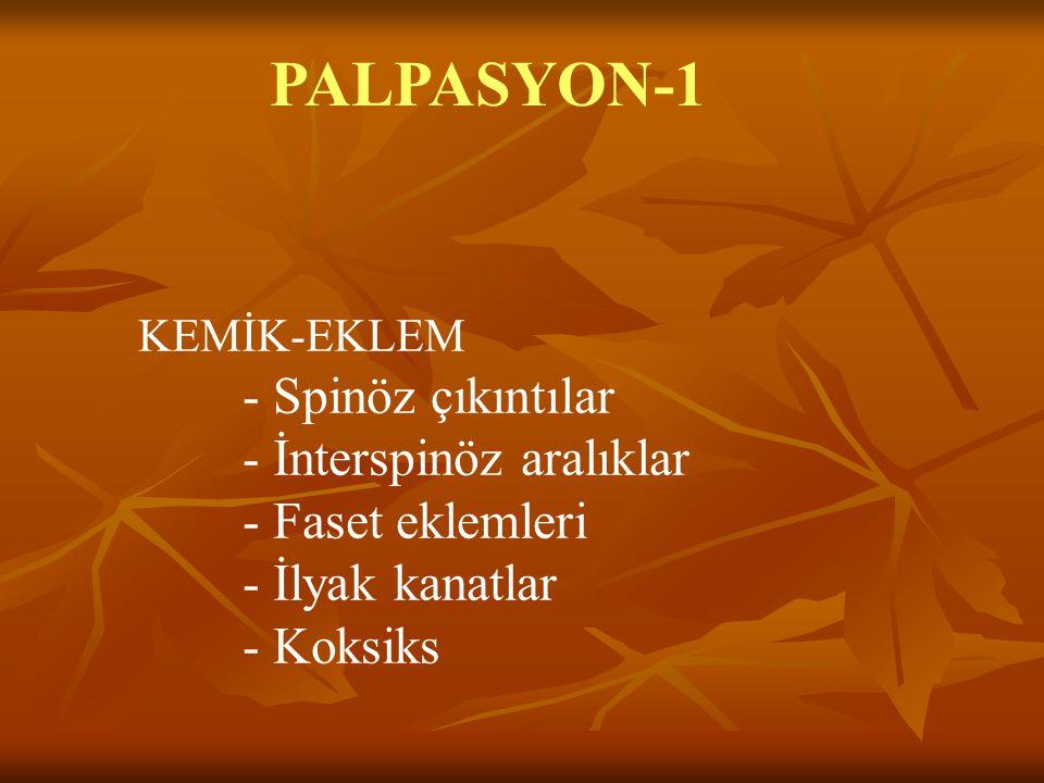 PALPASYON-1 KEMİK-EKLEM - Spinöz çıkıntılar - İnterspinöz aralıklar - Faset eklemleri - İlyak kanatlar - Koksiks