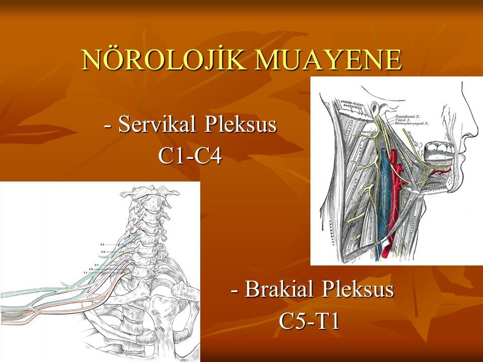 Servikal Pleksus Anahtar kası yoktur, fleksör, ekstansör, lateral fleksörler ve rotatorlar grup halinde test edilir.