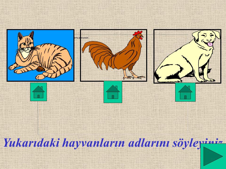 Çevremizde birçok hayvan vardır.Bunlar;kedi köpek,tavuk gibi hayvanlardır.Kaplumbağa, tavşan,balık da çevremizde yaşayabilir. Çevremizde erik,elma,arm