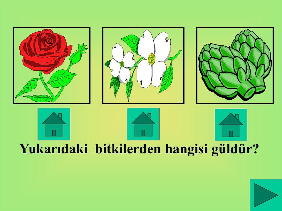 Çevremizde erik,elma,armut,çam ağaçlarını görebiliriz.Gül,menekşe gibi çiçekler de çevremizde bulunabilir. Çiçekler ve ağaçlar bitkidir.
