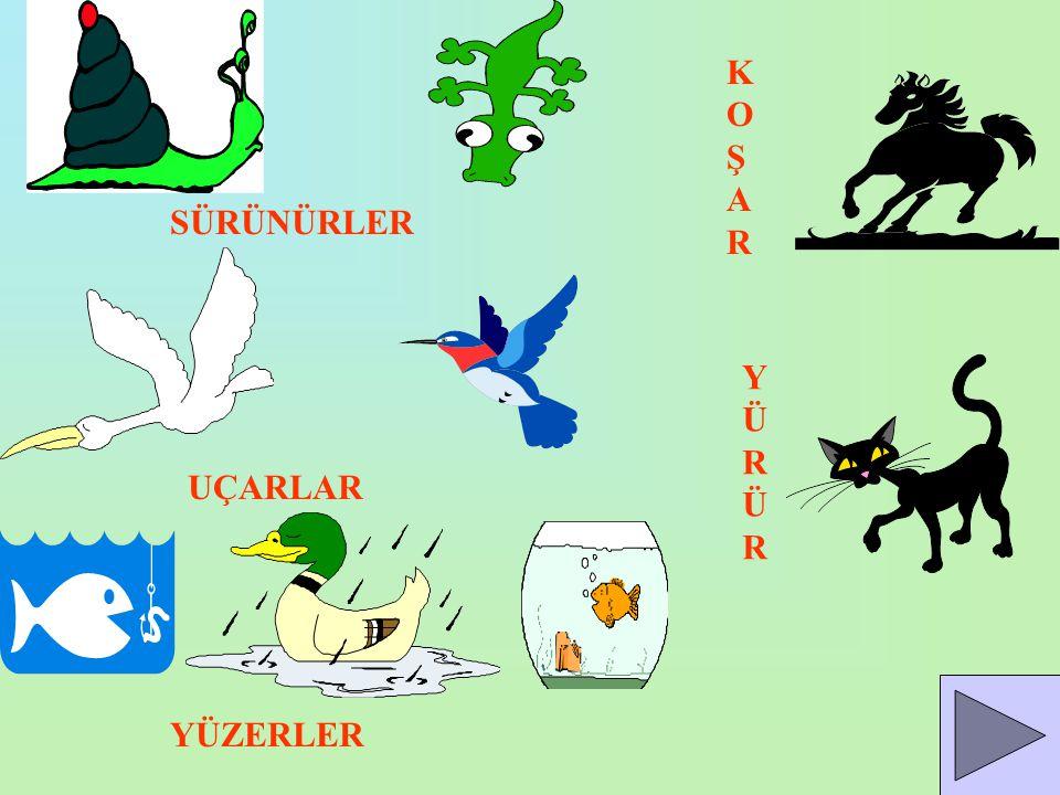 Hayvanlar değişik şekilde hareket eder. Köpek,kedi,at gibi hayvanlar yürüyerek ve koşarak hareket eder.Balıklar yüzerek kuşlar uçarak hareket eder.Yıl