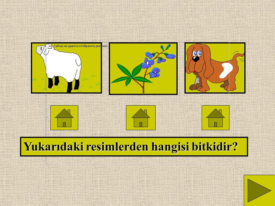 Yukarıdaki resimlerden hangisi hayvandır?