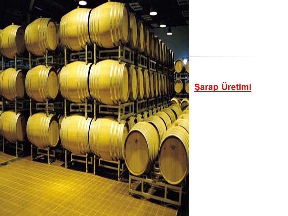 Şarap Üretimi