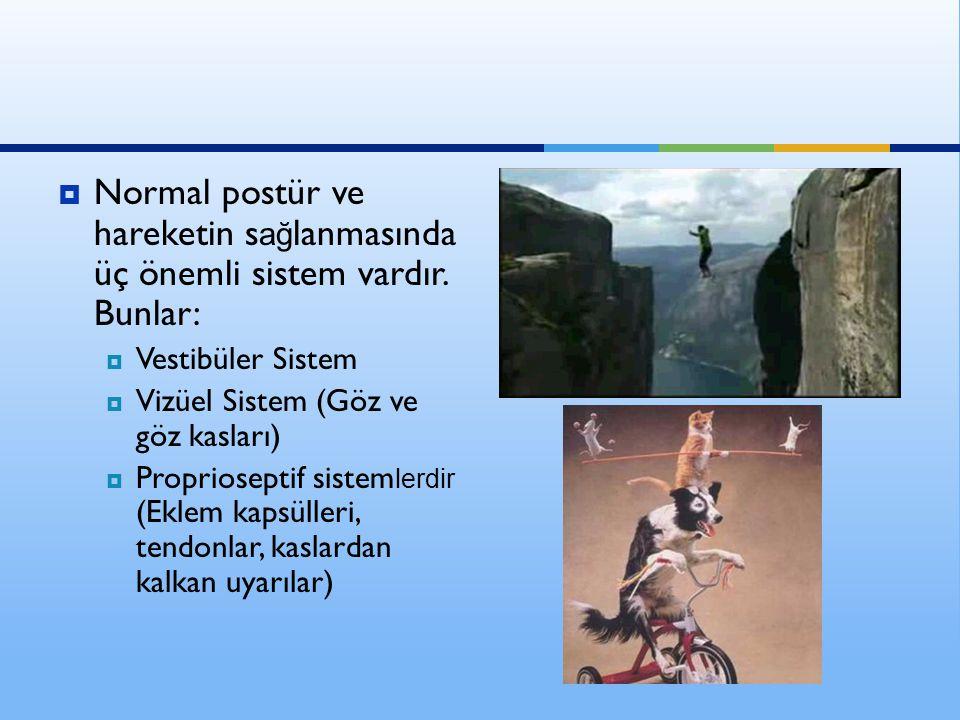  Normal postür ve hareketin s ağ lanmasında üç önemli sistem vardır. Bunlar:  Vestibüler Sistem  Vizüel Sistem (Göz ve göz kasları)  Proprioseptif
