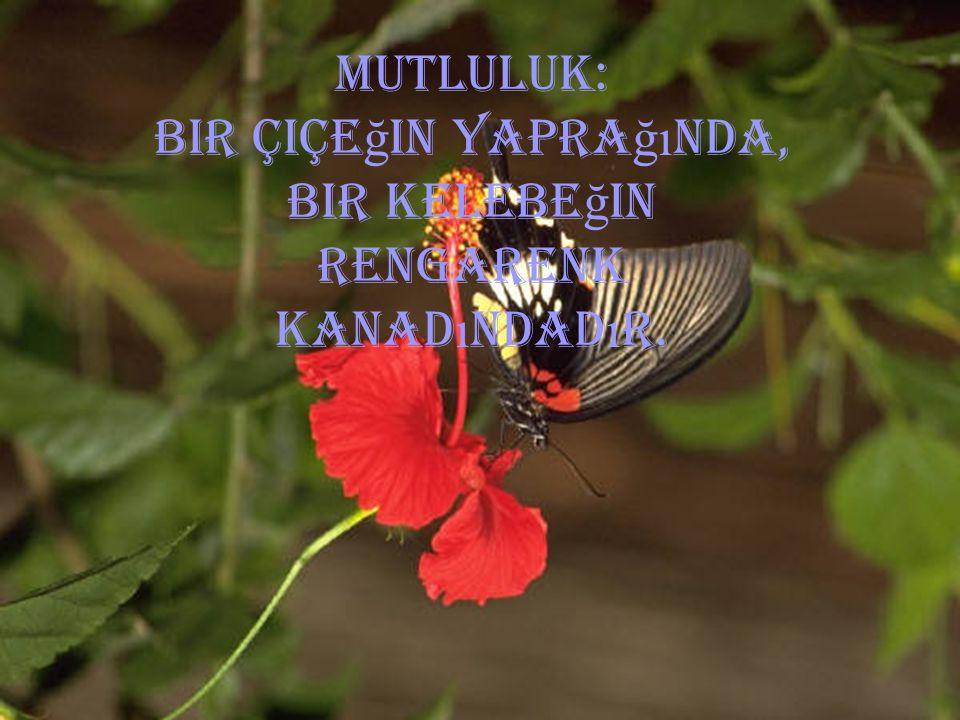 MUTLULUK: Bir çiçe ğ in yapra ğı nda, bir kelebe ğ in rengarenk kanad ı ndad ı r.