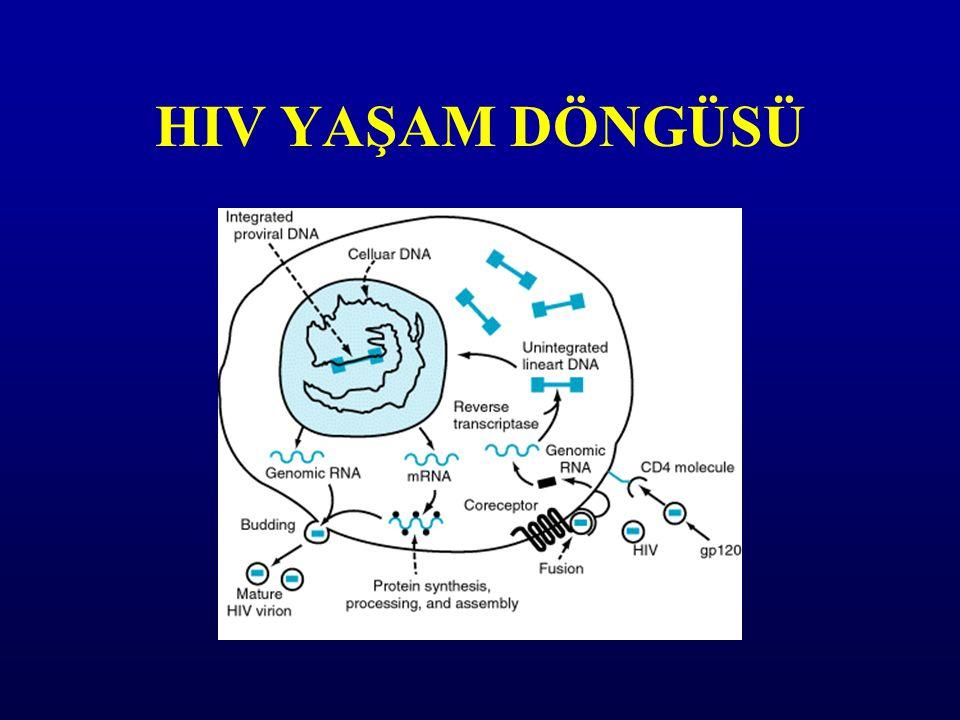 HIV YAŞAM DÖNGÜSÜ