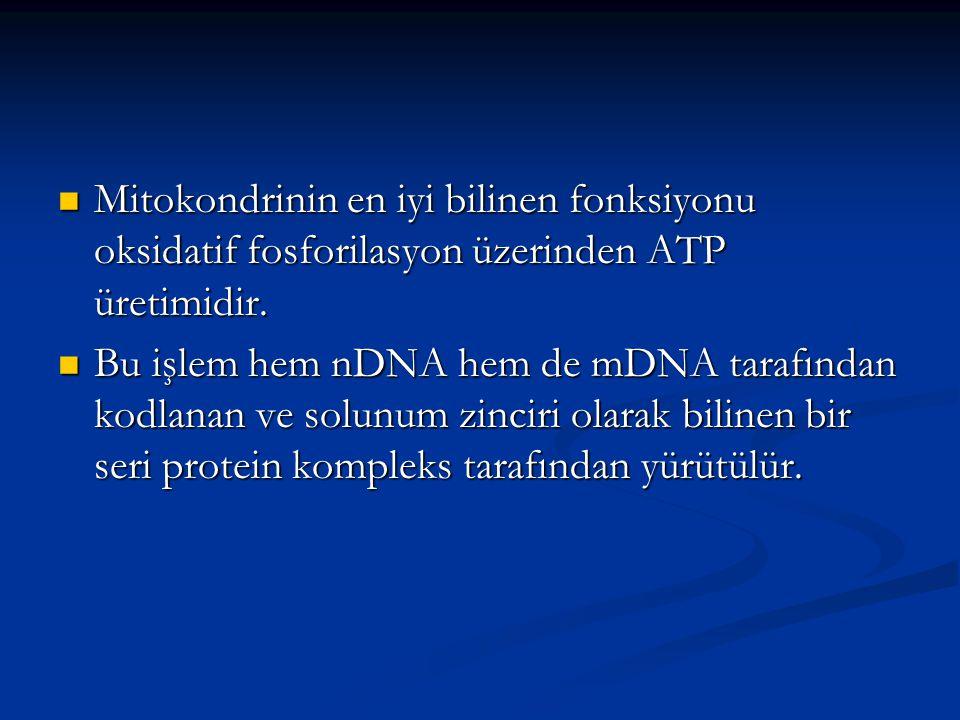 Mitokondrinin en iyi bilinen fonksiyonu oksidatif fosforilasyon üzerinden ATP üretimidir. Mitokondrinin en iyi bilinen fonksiyonu oksidatif fosforilas