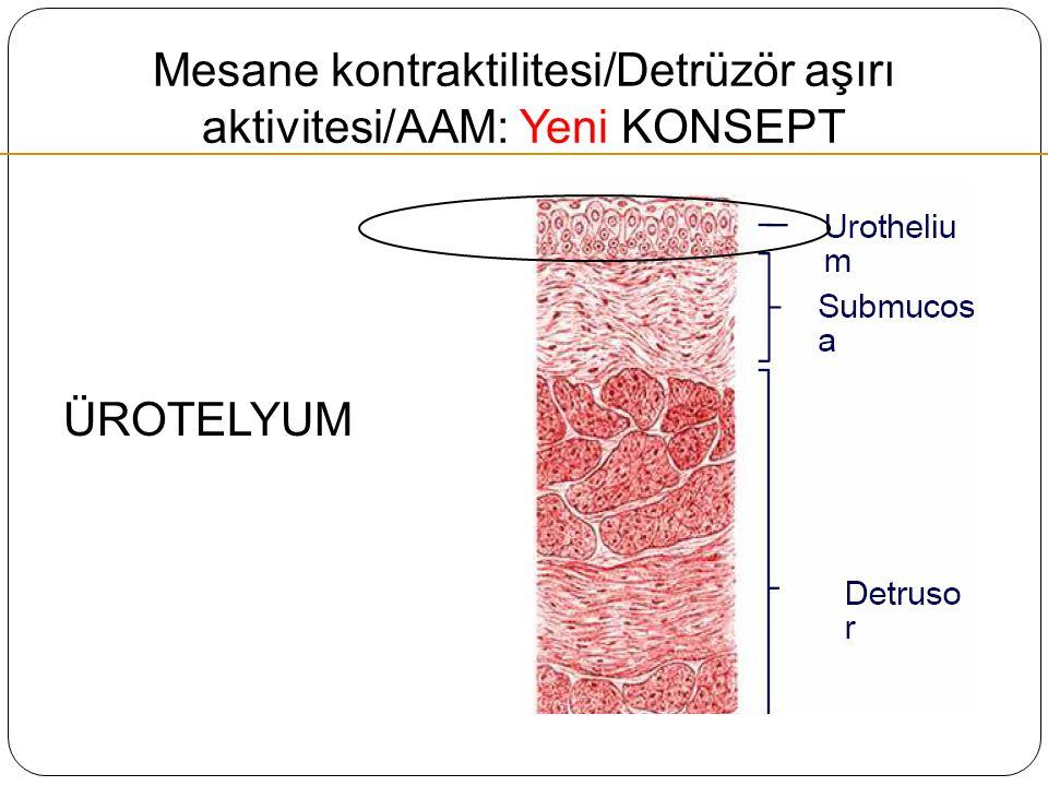 Mesane kontraktilitesi/Detrüzör aşırı aktivitesi/AAM: Yeni KONSEPT ÜROTELYUM