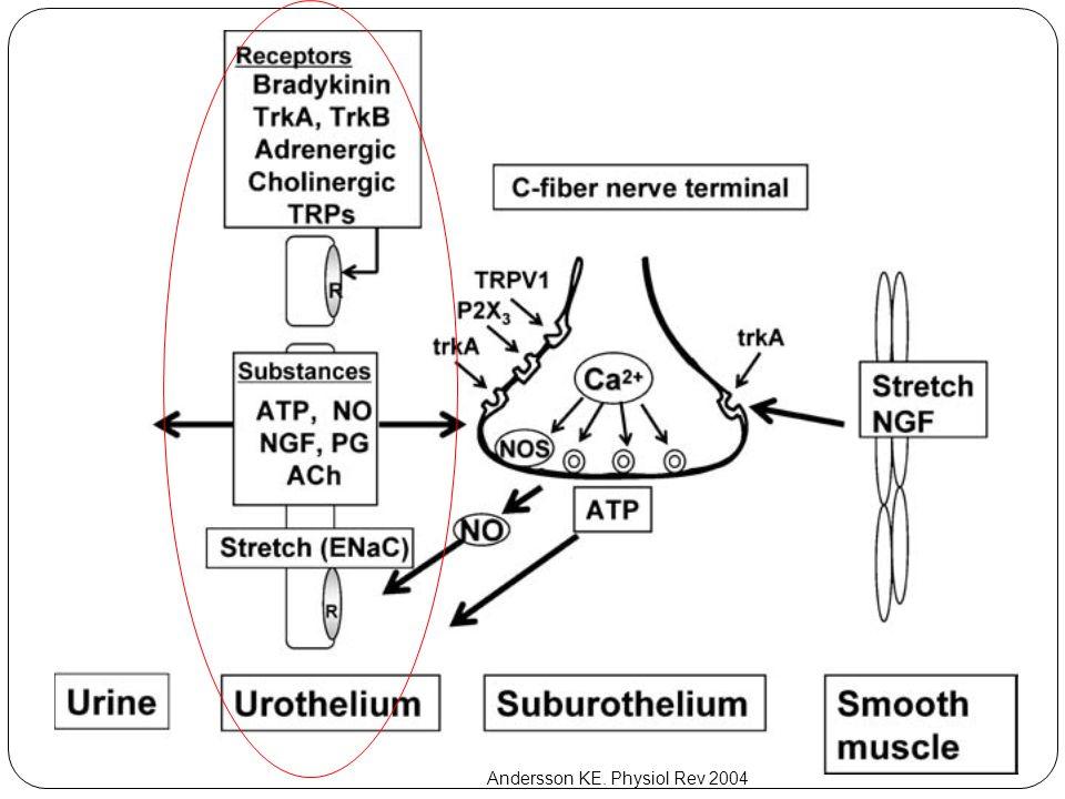 Ürotelyum kompleks resim Andersson KE. Physiol Rev 2004