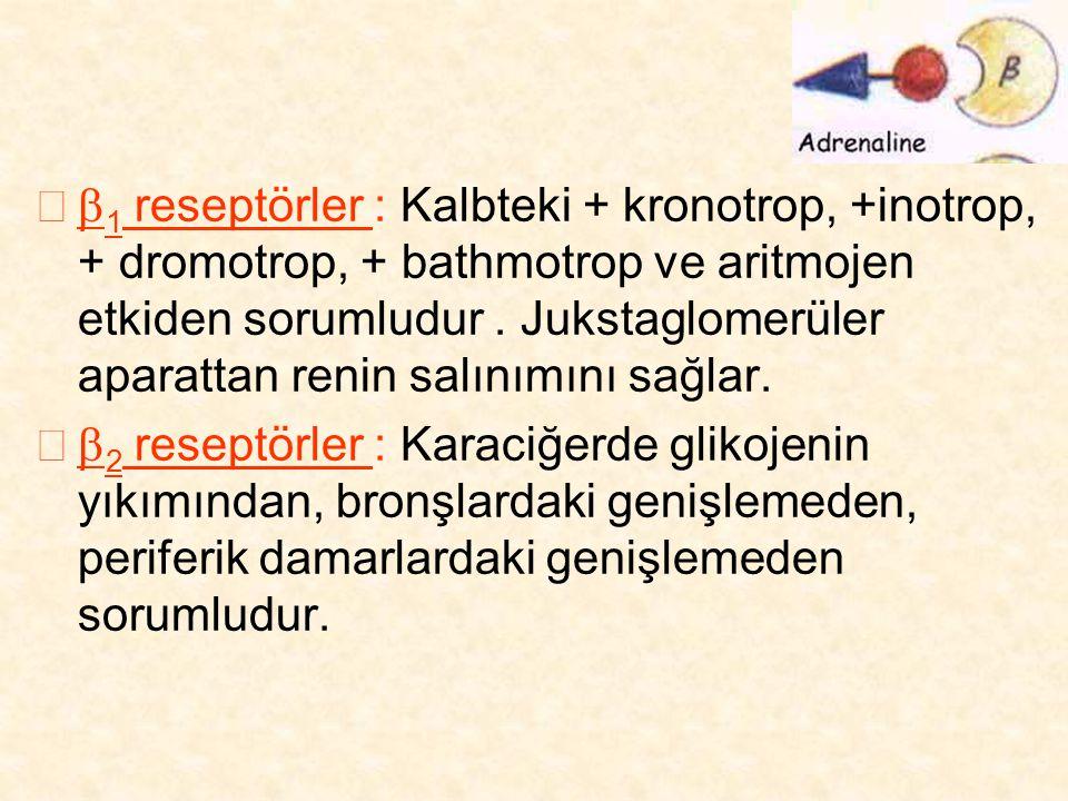  1 reseptörler : Kalbteki + kronotrop, +inotrop, + dromotrop, + bathmotrop ve aritmojen etkiden sorumludur. Jukstaglomerüler aparattan renin salınım