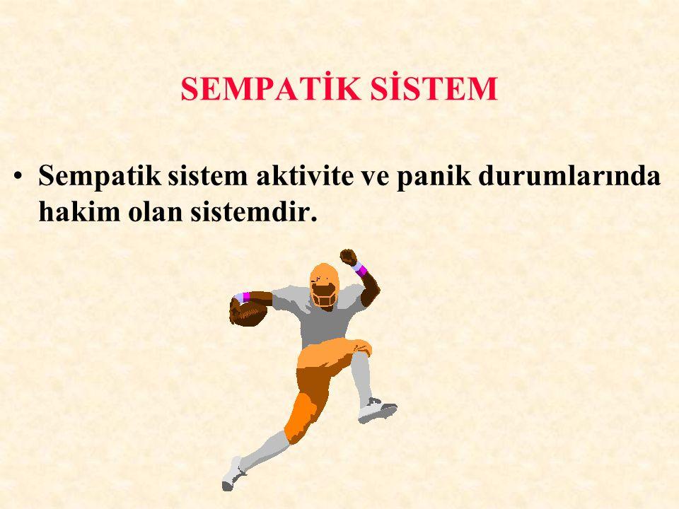 SEMPATİK SİSTEM Sempatik sistem aktivite ve panik durumlarında hakim olan sistemdir.