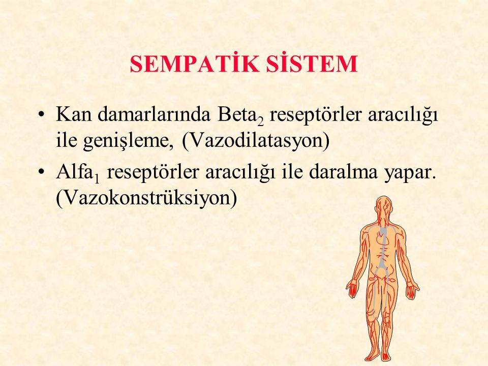 SEMPATİK SİSTEM Kan damarlarında Beta 2 reseptörler aracılığı ile genişleme, (Vazodilatasyon) Alfa 1 reseptörler aracılığı ile daralma yapar. (Vazokon
