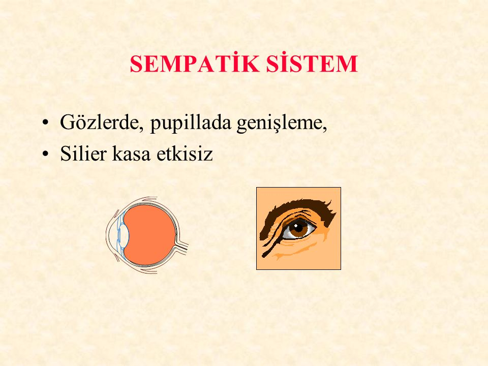 SEMPATİK SİSTEM Gözlerde, pupillada genişleme, Silier kasa etkisiz