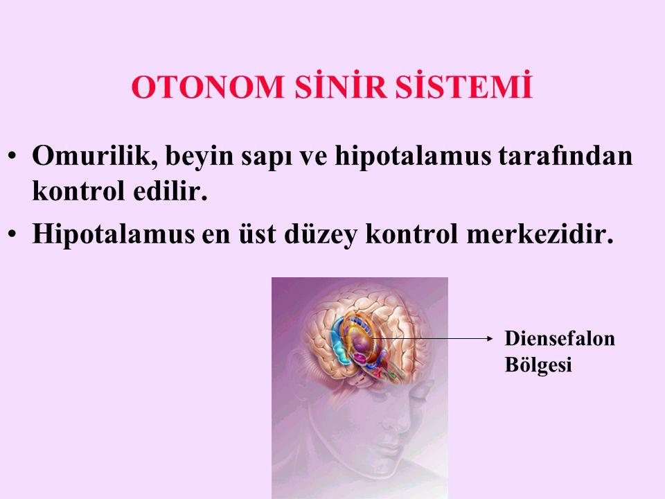 OTONOM SİNİR SİSTEMİ Omurilik, beyin sapı ve hipotalamus tarafından kontrol edilir. Hipotalamus en üst düzey kontrol merkezidir. Diensefalon Bölgesi