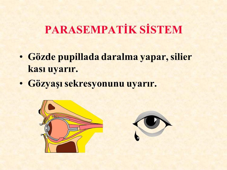 PARASEMPATİK SİSTEM Gözde pupillada daralma yapar, silier kası uyarır. Gözyaşı sekresyonunu uyarır.