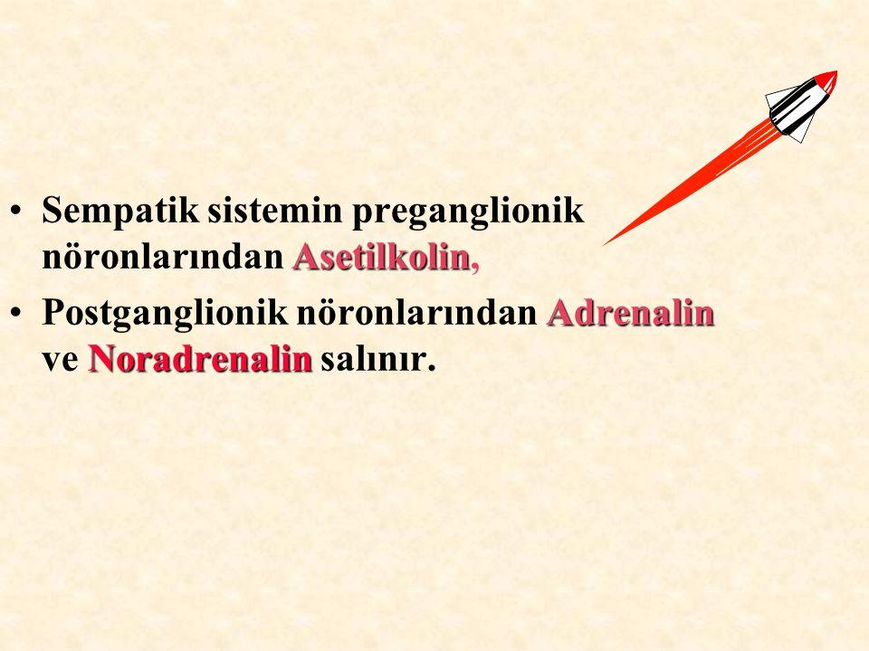 AsetilkolinSempatik sistemin preganglionik nöronlarından Asetilkolin, Adrenalin NoradrenalinPostganglionik nöronlarından Adrenalin ve Noradrenalin sal