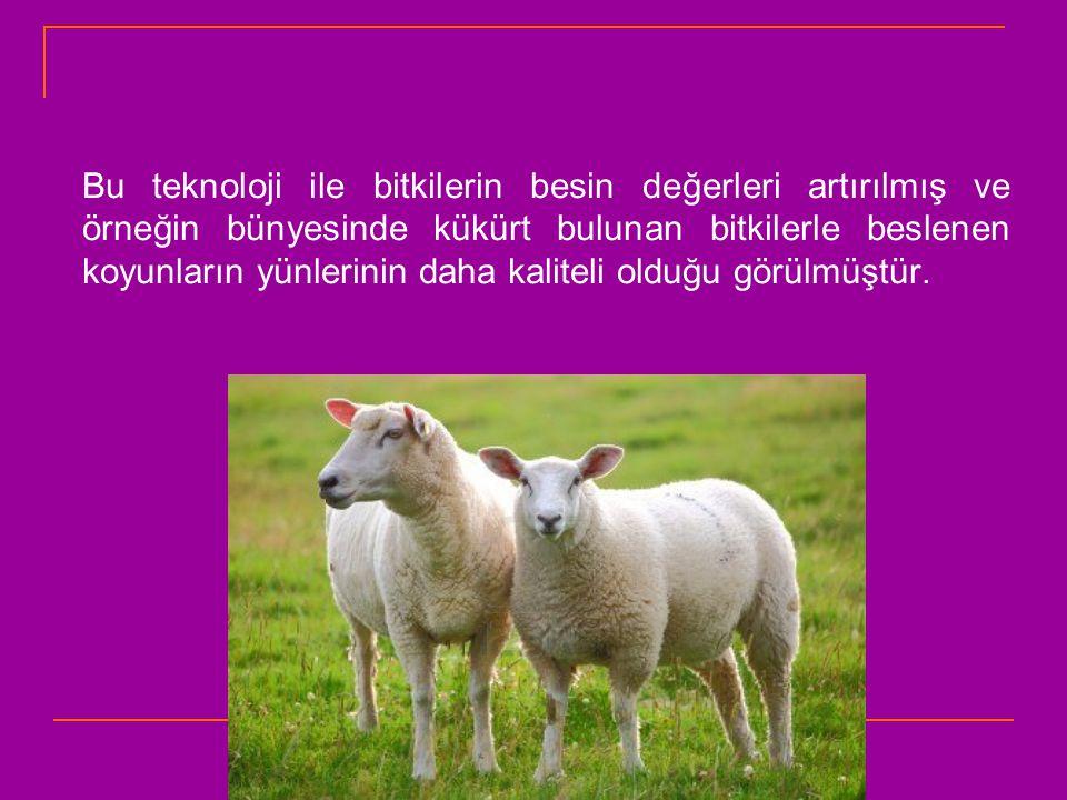 Bu teknoloji ile bitkilerin besin değerleri artırılmış ve örneğin bünyesinde kükürt bulunan bitkilerle beslenen koyunların yünlerinin daha kaliteli olduğu görülmüştür.