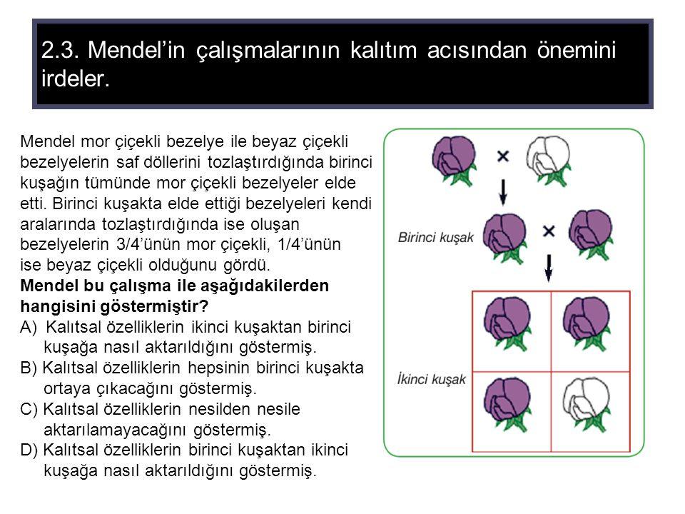 2.3. Mendel'in çalışmalarının kalıtım acısından önemini irdeler. Mendel mor çiçekli bezelye ile beyaz çiçekli bezelyelerin saf döllerini tozlaştırdığı