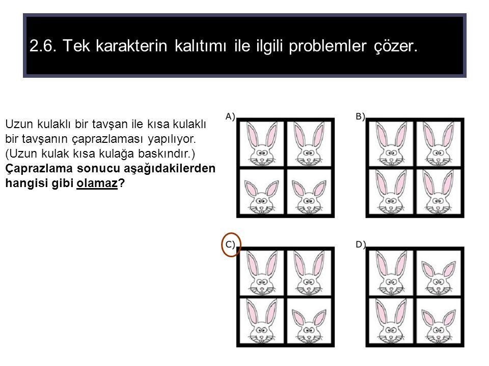 2.6. Tek karakterin kalıtımı ile ilgili problemler çözer. Uzun kulaklı bir tavşan ile kısa kulaklı bir tavşanın çaprazlaması yapılıyor. (Uzun kulak kı