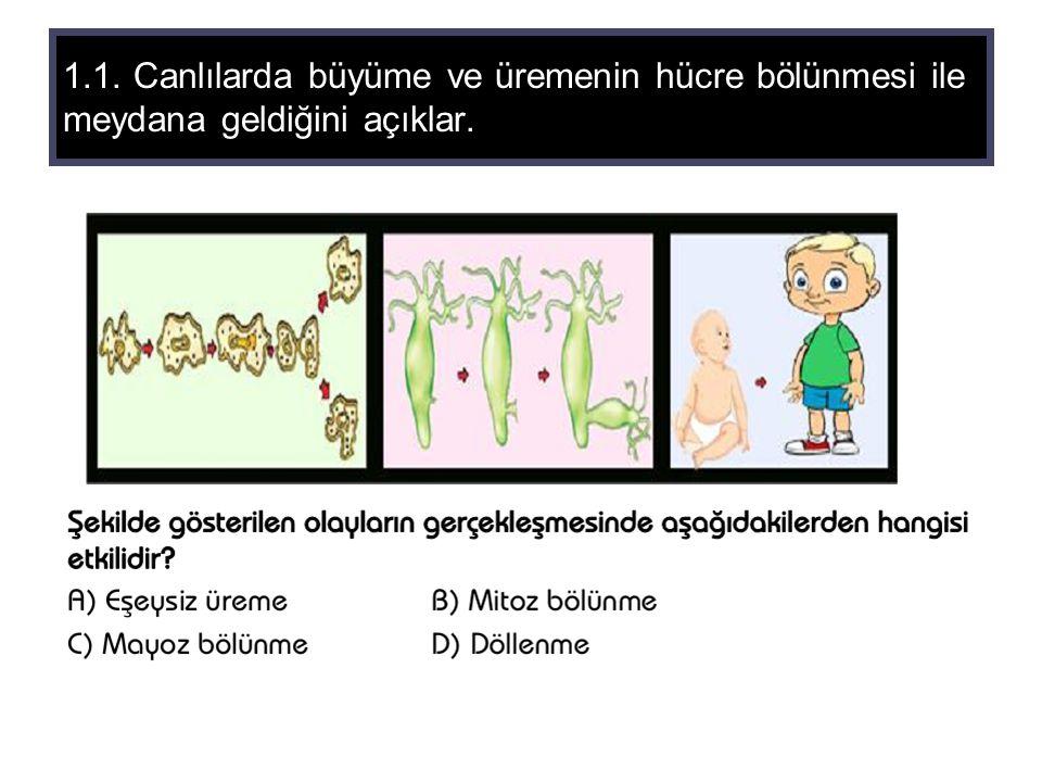 1.1. Canlılarda büyüme ve üremenin hücre bölünmesi ile meydana geldiğini açıklar.