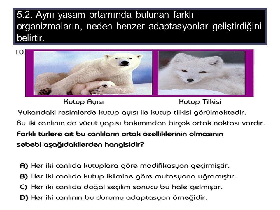 5.2. Aynı yasam ortamında bulunan farklı organizmaların, neden benzer adaptasyonlar geliştirdiğini belirtir.