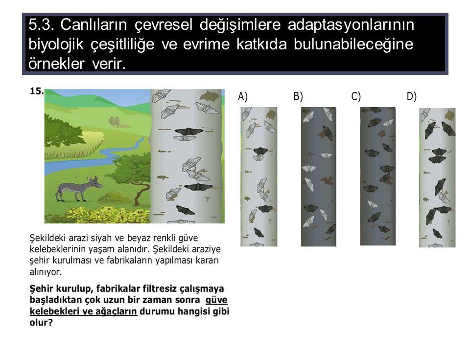 5.3. Canlıların çevresel değişimlere adaptasyonlarının biyolojik çeşitliliğe ve evrime katkıda bulunabileceğine örnekler verir.