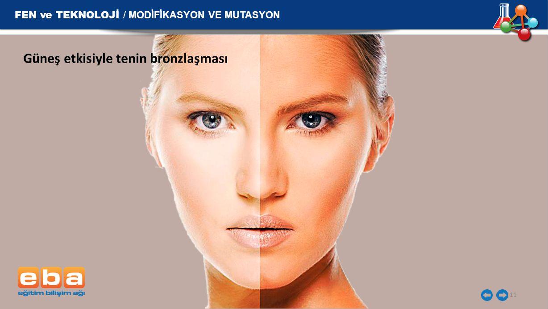 FEN ve TEKNOLOJİ / MODİFİKASYON VE MUTASYON 11 Güneş etkisiyle tenin bronzlaşması