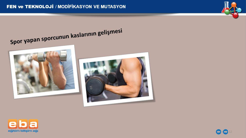 FEN ve TEKNOLOJİ / MODİFİKASYON VE MUTASYON 12 Spor yapan sporcunun kaslarının gelişmesi