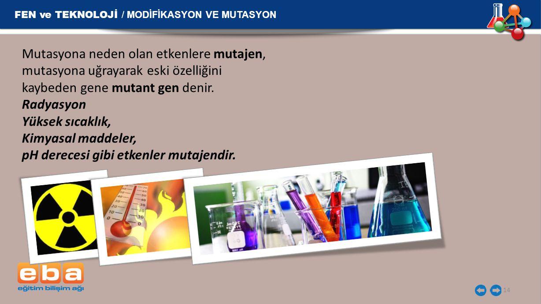 FEN ve TEKNOLOJİ / MODİFİKASYON VE MUTASYON 14 Mutasyona neden olan etkenlere mutajen, mutasyona uğrayarak eski özelliğini kaybeden gene mutant gen de