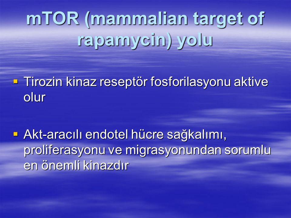 mTOR (mammalian target of rapamycin) yolu  Tirozin kinaz reseptör fosforilasyonu aktive olur  Akt-aracılı endotel hücre sağkalımı, proliferasyonu ve migrasyonundan sorumlu en önemli kinazdır