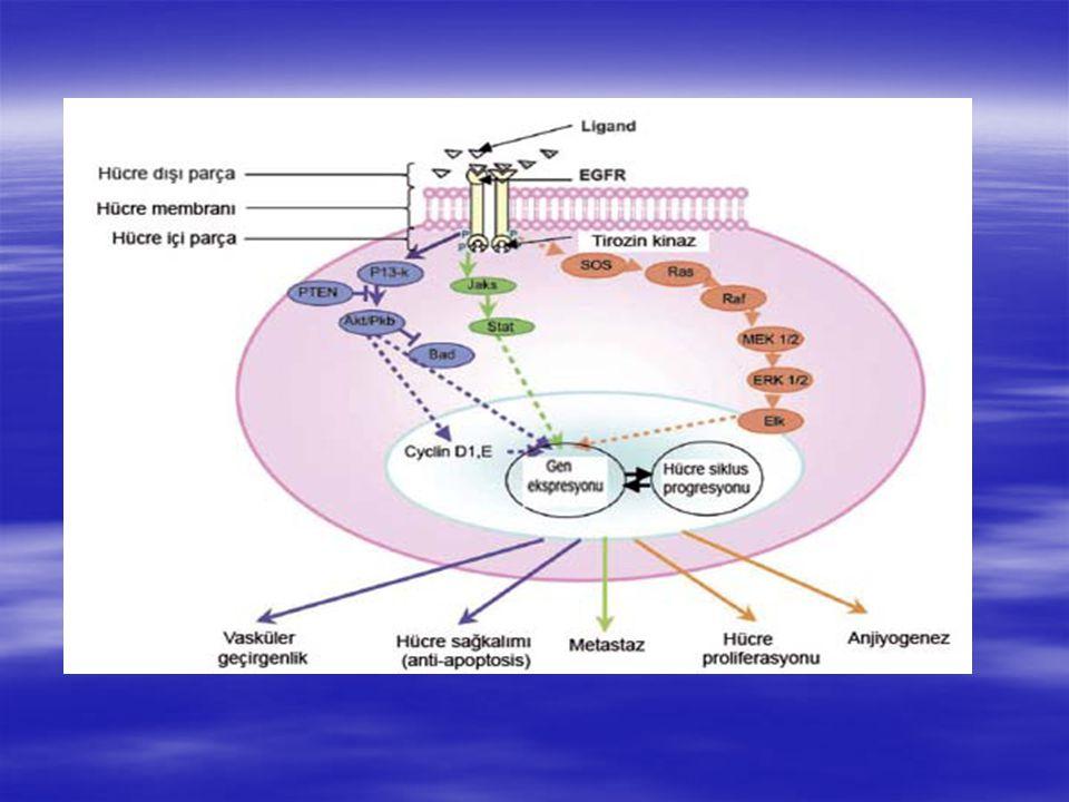 Tirozin Kinazlar   Epidermal büyüme faktörü   Platelet kökenli büyüme faktörü   Vasküler endoteliyal büyüme faktörü