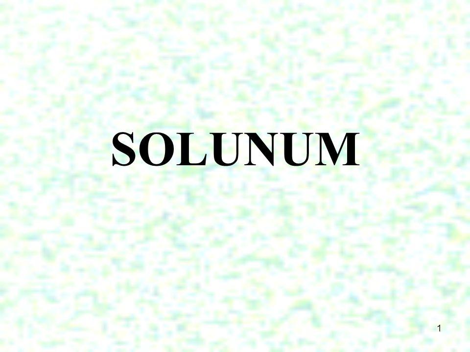 1 SOLUNUM